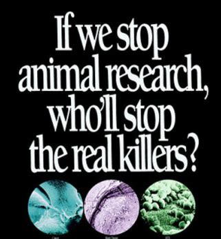 Animal Cruelty Essay - What Should You Write About?